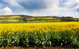 Scene west sussex Royalty Free Stock Image