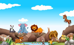 Scene with wild animals by the pond Royalty Free Stock Images