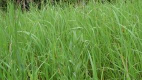 Scene of wild meadow grass stock footage