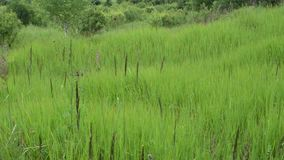 Scene of wild meadow grass stock video footage