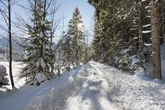 Scene at winter with snow and ice on small road Royalty Free Stock Photos