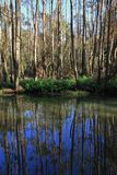 Scene at the Wrights Creek, Australia Stock Image