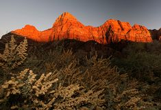 Scene at zion national park at sunset stock photography