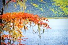 Sceneria jesień Zdjęcie Stock