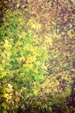Sceneria jesienna roślinność Zdjęcia Royalty Free