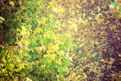 Sceneria jesienna roślinność Fotografia Royalty Free
