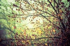 Sceneria jesienna roślinność Zdjęcie Royalty Free