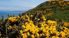 Sceneria kwiaty i góra Obraz Royalty Free