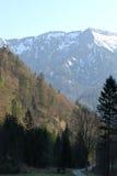 sceneria las Zdjęcie Stock