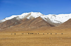 sceneria Tibet obraz stock