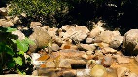 Sceneria tropikalny las deszczowy i rzeka z skałami Głęboka tropikalna lasowa dżungla z drzewami nad szybkim skalistym strumienie zdjęcie wideo