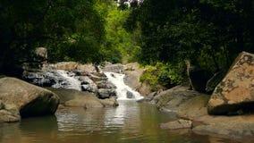 Sceneria tropikalny las deszczowy i rzeka z skałami Głęboka tropikalna lasowa dżungla z drzewami nad szybkim skalistym strumienie zbiory
