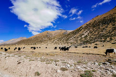 Sceneria w xizang turystyki przejażdżki drogi górze Zdjęcia Stock