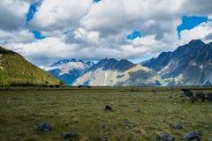 Sceneria z górą Cook, widok od dziwki doliny Zdjęcie Stock