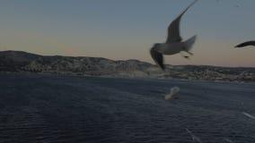 Sceneria z seagulls nad morzem, wybrzeża i wieczór niebo zbiory wideo