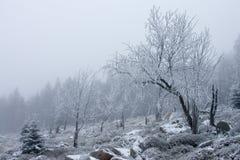 scenerii śnieżna drzew zima Zdjęcia Royalty Free