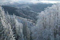 scenerii nieskazitelna zima Zdjęcia Royalty Free