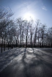 scenerii piękna zima Zdjęcia Royalty Free