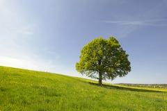 scenerii wiosna Obrazy Royalty Free