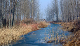 scenerii zima Obraz Stock