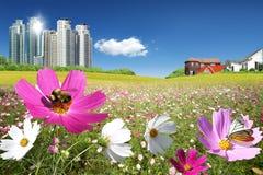 Scenery Royalty Free Stock Photo