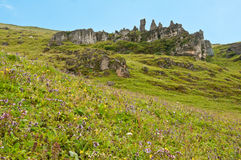 Scenery. The beautiful wild flowers and peculiar modelling of the rocks at high mountain Stock Image