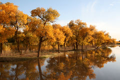Scenery. Beautiful scenery in autumn,China Royalty Free Stock Photography