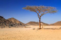 Scenery of the african desert. In Egypt Stock Photography