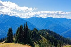Scenery along the Hurricane Hill Trail. Olympic National Park Stock Photography