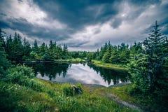 Scenery around mendenhall glacier park in juneau alaska royalty free stock photography