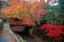 Scenery of autumn foliage with view of a red bridge over a stream in a beautiful Japanese garden. & fiery maple trees in the background ! A garden in Sanzen Royalty Free Stock Photography