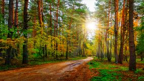 Scenery autumn forest on bright sunny day. Road in colorful woodland. Sunbeams in autumn forest. Scenery autumn forest on bright sunny day. Road in colorful royalty free stock photography