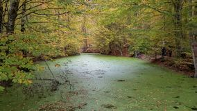 Autumn landscape in Seven Lakes Yedigoller Park Bolu, Turkey Stock Images