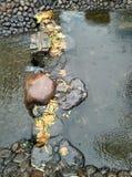 The scenery in autumn rain Stock Photography