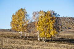 Scenery in autumn Royalty Free Stock Image