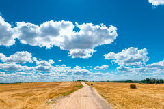 Scenery beautiful yellow field and cumulus clouds Royalty Free Stock Photo
