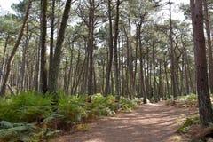 Scenery on Brownsea Island Stock Image