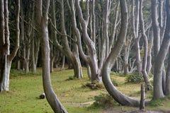 Scenery on Brownsea Island Royalty Free Stock Image