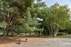 Scenery on Brownsea Island Royalty Free Stock Images