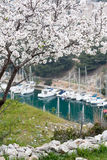 Scenery of calanques near cassis. Scenery with yacht boats and beautiful tree near cassis Stock Photo