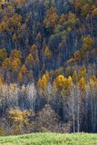 Scenery categories: Da Hinggan Mountains in Heilongjiang Province autumn scenery. Eastphoto, tukuchina, Scenery categories: Da Hinggan Mountains in Heilongjiang Stock Images