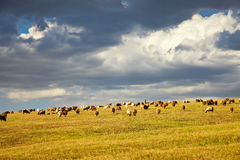 Scenery categories: Turpan Jai grassland Liao. Eastphoto, tukuchina, Scenery categories: Turpan Jai grassland Liao Royalty Free Stock Images