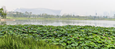 The scenery in chengdu,china Royalty Free Stock Photography