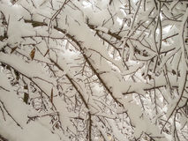 Scenery covered frost branches Royalty Free Stock Photos