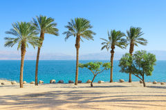 Scenery of Dead Sea with palm trees on sunshine coast Royalty Free Stock Images