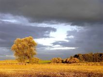 scenery with fall tree at sunrise with dark sky Stock Photo