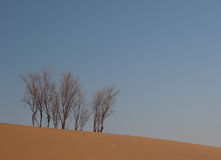 Scenery. A few trees standing in the desert Stock Image