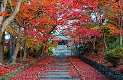Scenery of fiery maple trees at entrance  Sandou  to Bishamon Hall Bishamondo, a famous Buddhist temple. In Kyoto Japan, with colorful foliage by stairway & red Stock Images