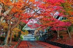 Scenery of fiery maple trees at the entrance Sandou to Bishamon Hall Bishamondo. A Buddhist temple in Kyoto, Japan, with a gardener walking on the stairway & royalty free stock photo