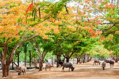 Scenery with flame trees Stock Image